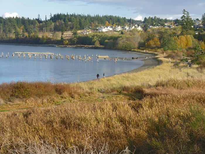 Beach and marsh at the Anacortes ferry landing