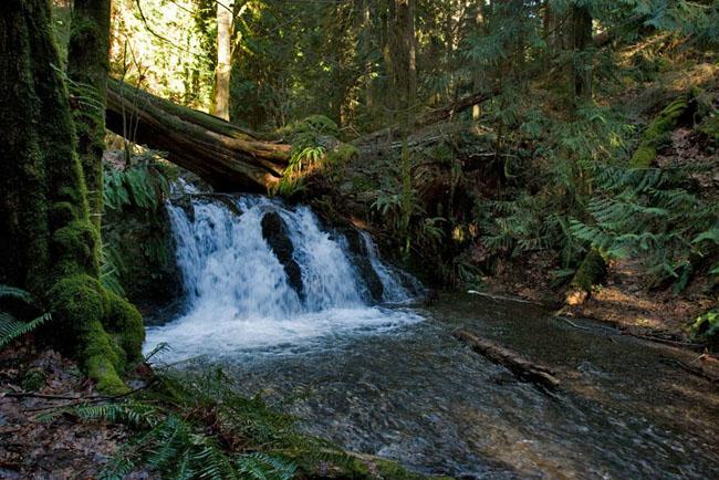 Cascade Falls - Moran Park, Orcas Island