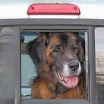 Murphy in his pickup truck
